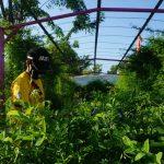 Pesona Bunga Liar Kampung Telang Penjaringan
