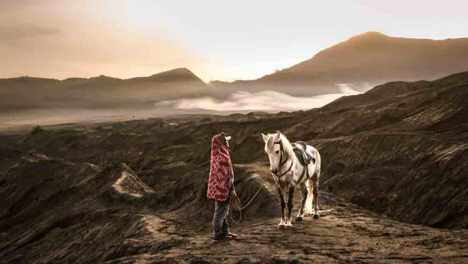 Kuda dan Keagungan Bromo
